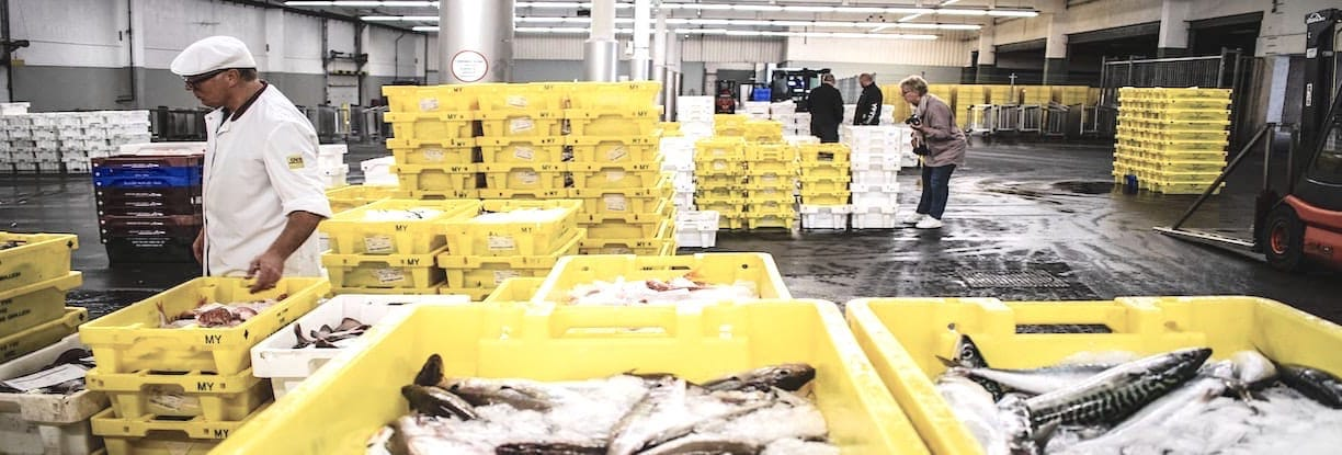Fish Market in Cold Storage Warehouse